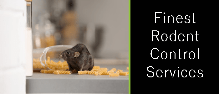Finest Rodent Control Services